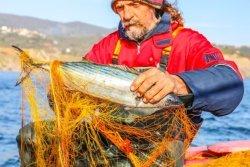 Conozcamos algo más sobre los pescasdos y los mariscos